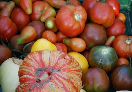 Gartenberatung im Biogarten zum Braunfäule bei Tomaten