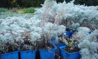 Gartenideen mit Topfpflanzen