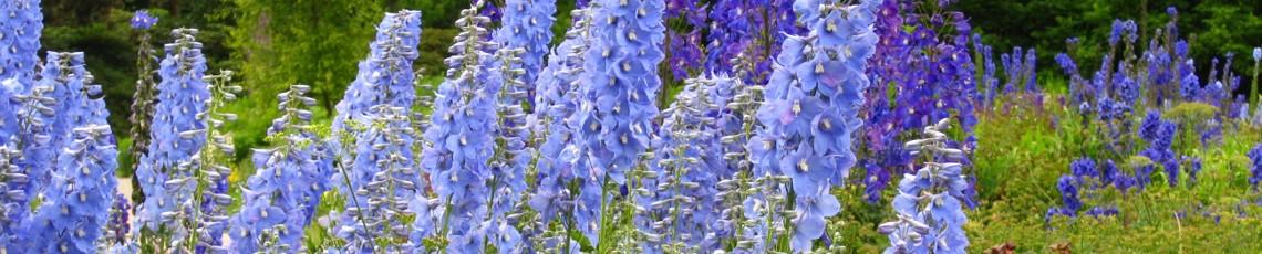 horticultura – Gartenkurse und Gartengestaltung in Fürstenfeldbruck