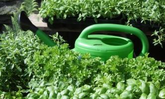 horticultura-Tipp: Düngen mit Pflanzenjauche