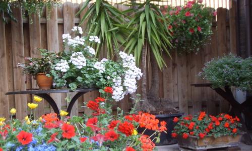 kuebelpflanzen ueberwintern