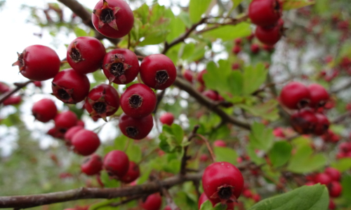 horticultura-wildobst-kurs